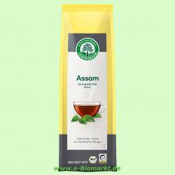 Assam Blatt (Lebensbaum)