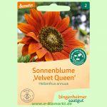 Sonnenblume Velvet Queen (Bingenheimer Saatgut)
