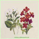 Cocktail-Serviette Botanical (Paper+Design)